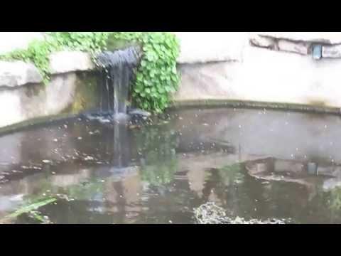 Tower garden memorial in UT campus - austin 2