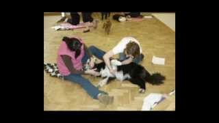 Canine Massage Therapy Workshop June 2012