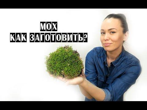 Как собрать мох для поделок