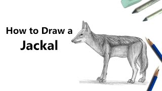 How to Draw a Jackal with Pencils [Time Lapse]