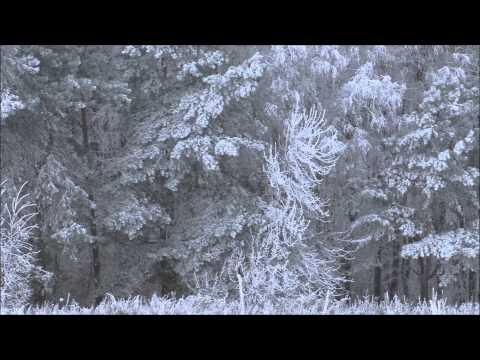 Красивый зимний лес. Лес зимой