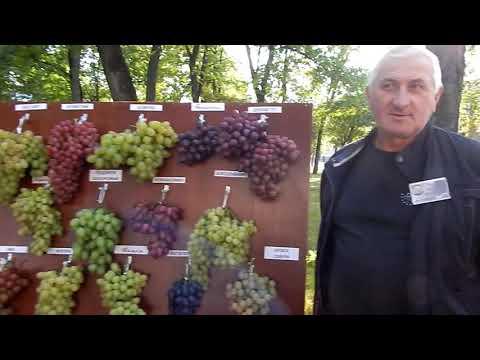 Гомельская выставка винограда.
