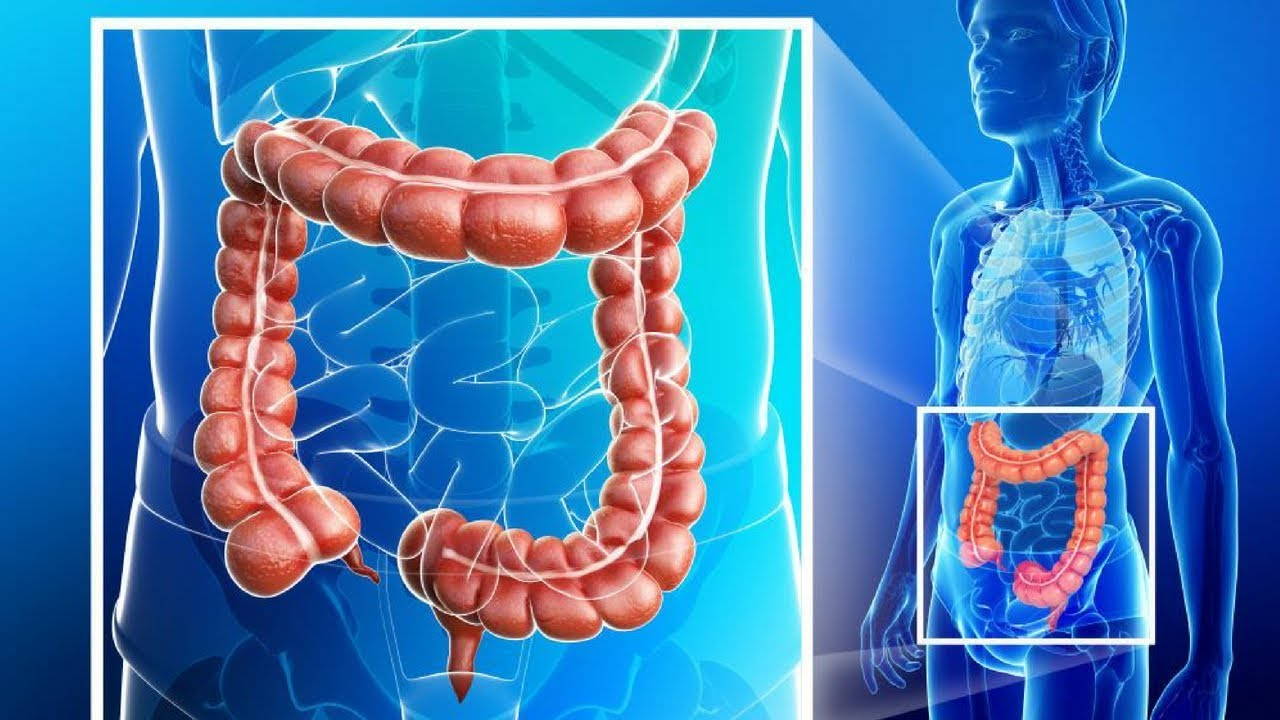 Colon Function In Digestive System Youtube