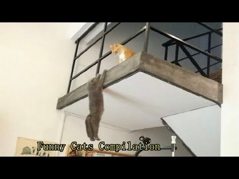 Sweet CATS - Funny And Cute Cats Best Compilation