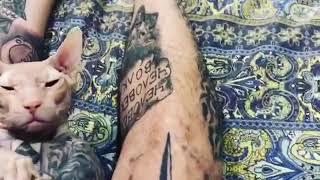 Кот в татуировках как хозяин