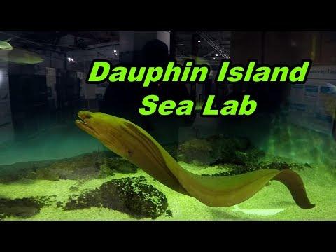Dauphin Island Sea Lab & Estuarium