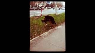 Собаки трахаются