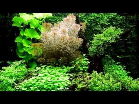 Оформление аквариума на 300 литров от Dan Crawford