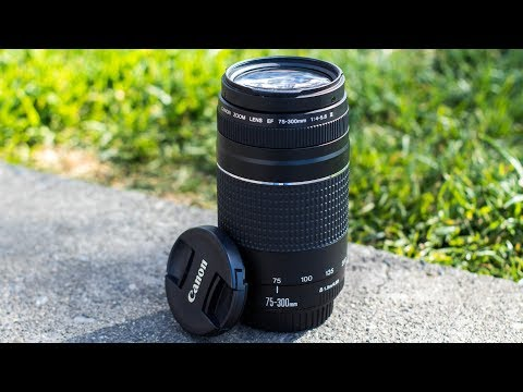 5 Reasons Why You SHOULD Consider The Canon 75-300mm Lens!
