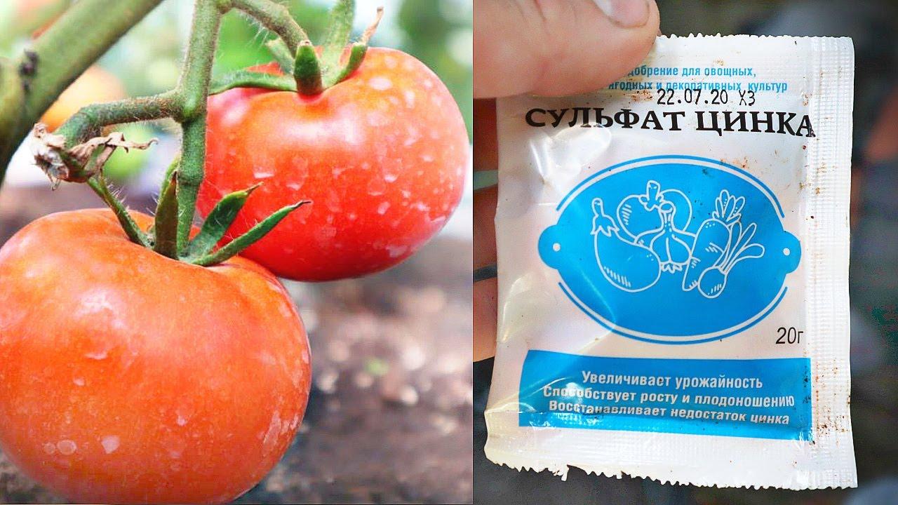 Один агроном посоветовал брызгать томаты и перец этим в августе! И ПРАВДА ПЛОДЫ КРАСНЕЮТ НА ГЛАЗАХ!!