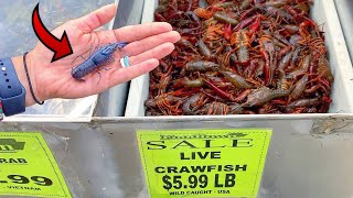 RARE Blue Lobster Crawfish FOUND at INTERNATIONAL FOOD SUPERMARKET!