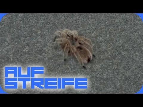 Giftige Vogelspinne auf der Wache: Großer Schrecken für die Polizisten! | Auf Streife | SAT.1