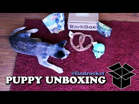 Puppy Unboxing #5 - First BarkBox