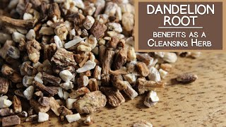 Dandelion Root Benefits as a Cleansing Herb
