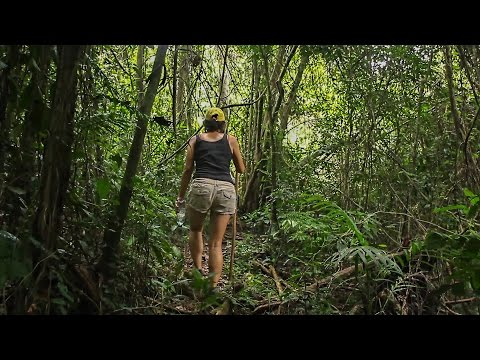 Deep into the Sesaot Forest, Lombok
