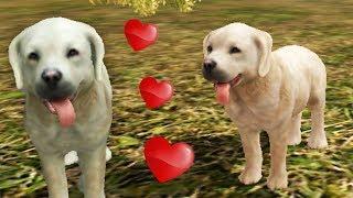СИМУЛЯТОР СОБАКИ! ПАПА нашел МАМУ в МУЛЬТФИЛЬМ игре про собак Sim Dog