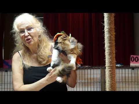 Aloha Cat Fanciers Halloween Costume Contest 2017