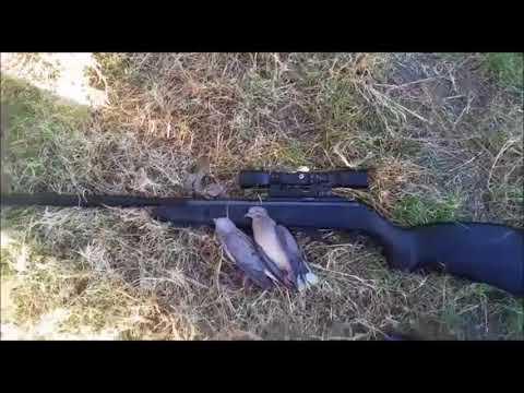 caza con rifle de aire 5.5