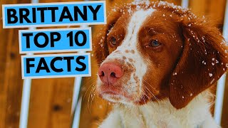 Brittany  TOP 10 Interesting Facts
