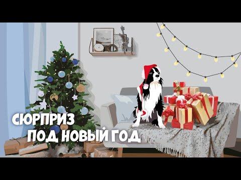 Собака-забивака: Сюрприз под Новый год!