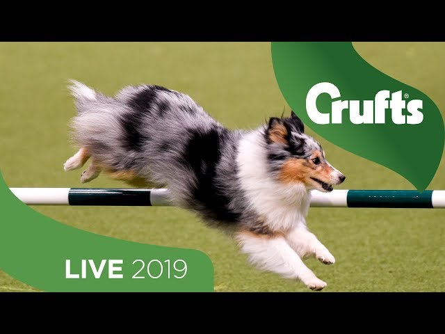 Crufts 2019 Day 2 - Part 1 LIVE