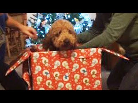 Kids React to Christmas Puppy Surprise