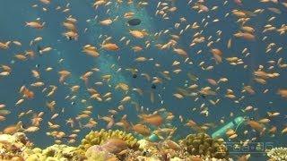 Science O.C.N. -  Deep Water Ocean Lounge - Solution