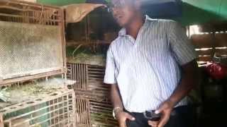 Grasscutter Farming In Nigeria Part2