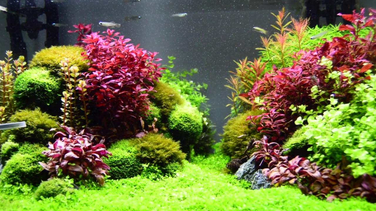 Aquascape: Planted Aquarium with Seiryu - YouTube