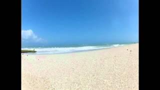 Dog on beach (Music clip: Broken Submarine by Kithkin)