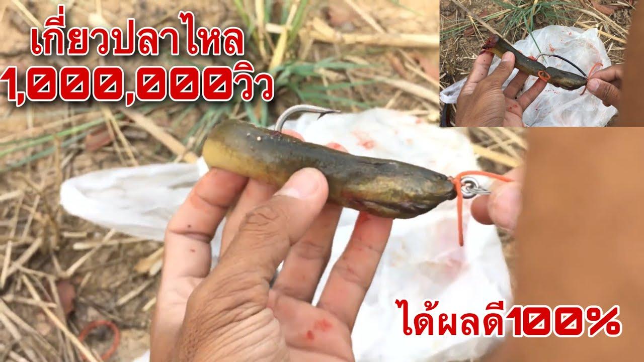 สอนเกี่ยวเหยื่อตกชะโดด้วยปลาไหลแบบตีลาก