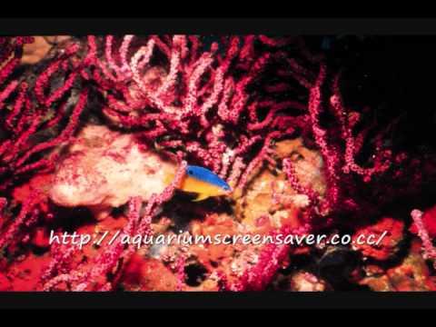 Screensaver That Is Aquarium Style, Free Downloads