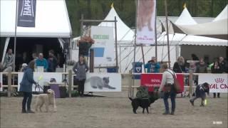 Jachttraining Animal Event 2017