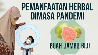 253 - Pemanfaatan Herbal Buah Jambu Biji Dimasa Pandemi