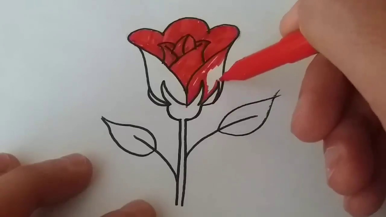 çok Kolay Adım Adım Gül çizimirose Drawing