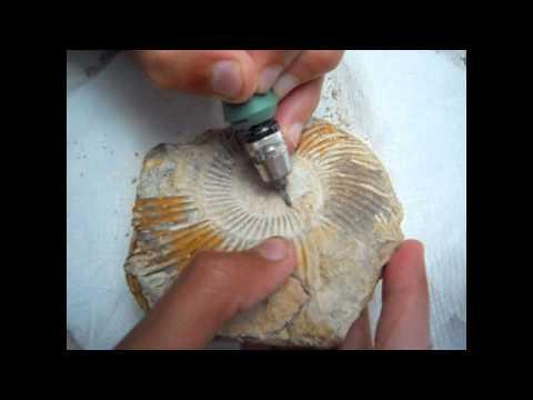 Fossil Ammonite Preparation