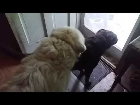 Bad dog! from YouTube · Duration:  25 seconds