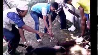 Dashain ko ramailo 2072 in Bhangara - 7 Parbat