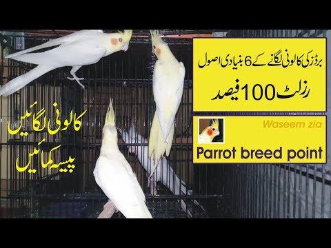 colony banany ka tarika   waseem zia   urdu hindi
