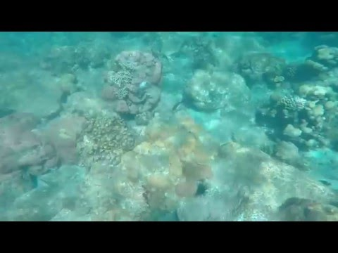GoPro footage of Snorkeling/swimming/goofing off 2016 Cruise.