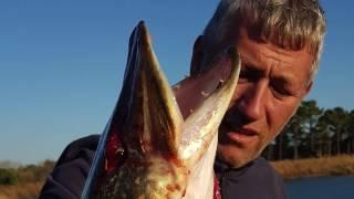 Terkos gölünde devasa Turna balıkları