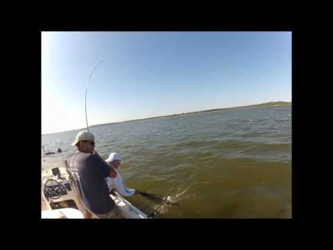 35lb Blue Catfish Caught at Lake Eufaula. My first MONSTER Catfish on 8lb test. Caught & Released! from YouTube · Duration:  3 minutes 36 seconds  · 1,000+ views · uploaded on 8/10/2013 · uploaded by Okie DirtFishing