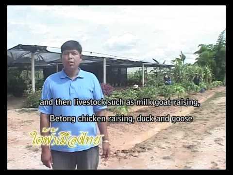 โครงการฟาร์มตัวอย่างวังพญา-ท่าธง 1/2