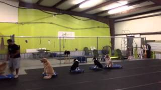 Having Fun With Training Multiple Dogs