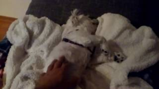 Tofik udaje martwego psa