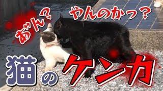 猫#ケンカ 外の庭掃除をしていたら近所の猫が喧嘩していました。 猫の...