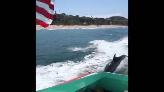 Dolphins Ride Wake Behind Malibu Lifeguard Boat