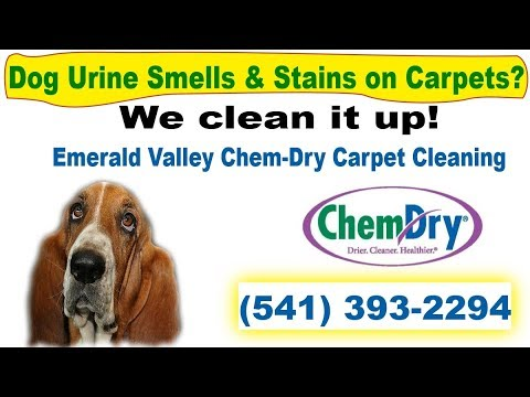 Carpet Cleaning Eugene How To Remove Dog Urine Smell From Carpet Get Rid Of Dog Urine Odor