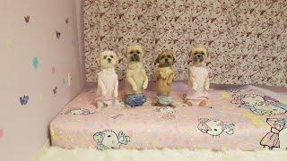 Bốn bé chó tuyệt vời thông minh yêu thích phòng ngủ mới, và giấc mơ đẹp 😴💖🌷