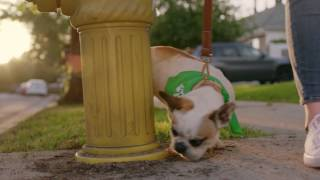 """Rover.com Introduces """"The Dog People"""" in First Integrated National Brand Campaign"""